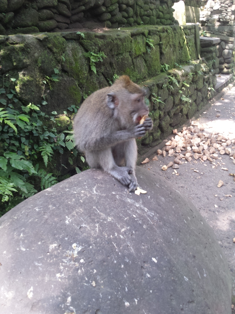 The monkeys were wild